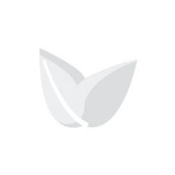 NL Auto 5 Fem. - White Label