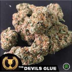 DEVIL'S GLUE (10)
