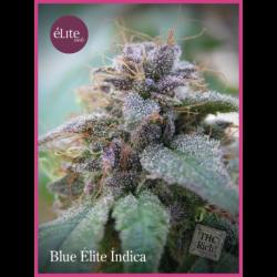 BLUE ELITE INDICA (7)