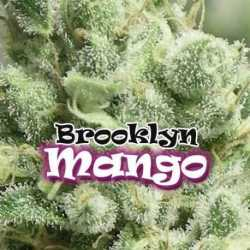 BROOKLYN MANGO (4)