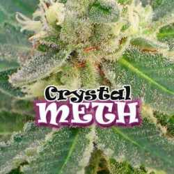 CRYSTAL M.E.T.H. (2)