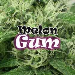 MELON GUM (8)