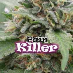 PAINKILLER (8)