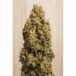 GREEN CRACK CBD (5)