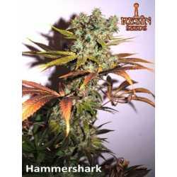 HAMMERSHARK (5)