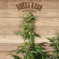 BUBBA KUSH (3)