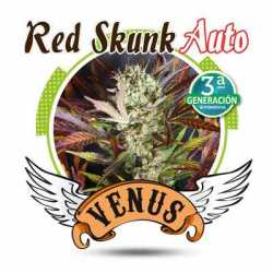 RED SKUNK AUTO (100)