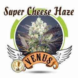 SUPER CHEESE HAZE (100)