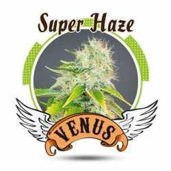 SUPER HAZE (5)