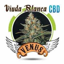 VIUDA BLANCA CBD (3)