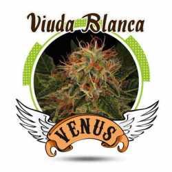 VIUDA BLANCA (25)