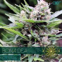 BONA DEA (3) CBD