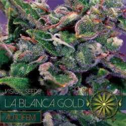 LA BLANCA GOLD AUTO (10)