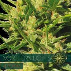 N.LIGHTS (10) AUTO