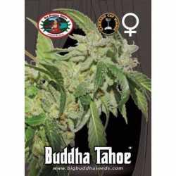 BUDDHA TAHOE (5)