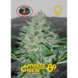 FREEZE CHEESE 89 (10)