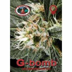 G-BOMB (5)