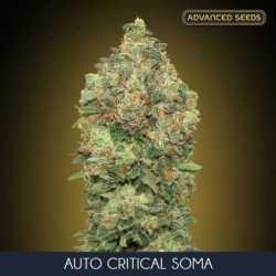 AUTO CRITICAL SOMA (3)