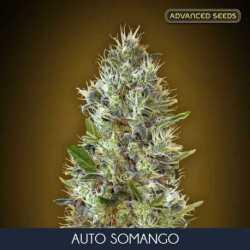 AUTO SOMANGO (25)