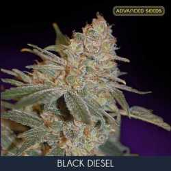 BLACK DIESEL (3)
