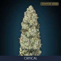 CRITICAL (3)