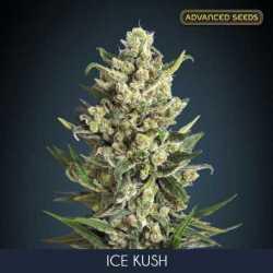 ICE KUSH (3)