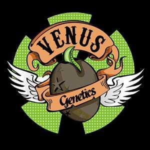 VENUS SEEDS | www.merkagrow.com